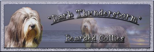 Banner Dark Thunderstorm Bearded Collies