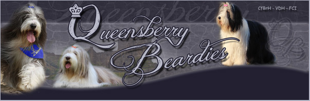 Banner Queensberry Beardies