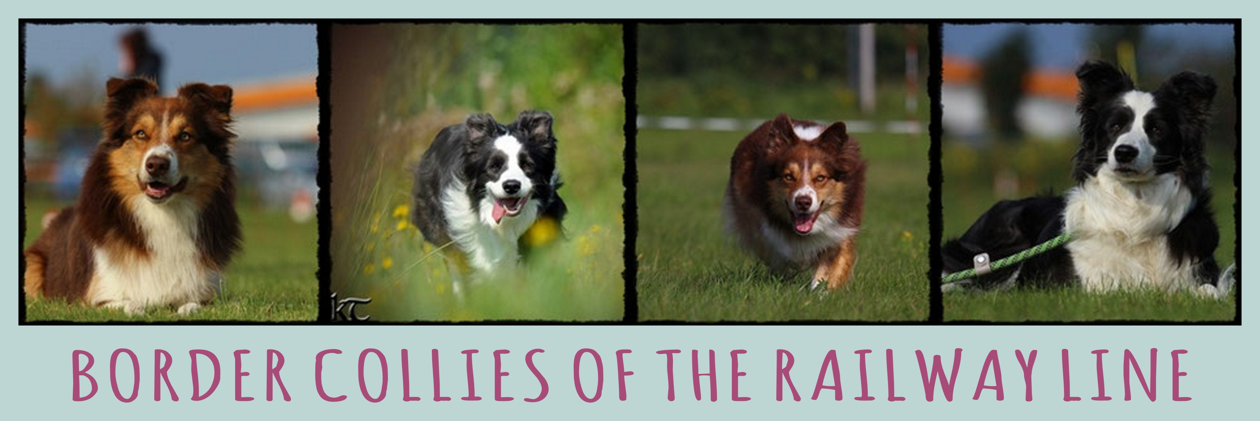 Banner Border Collies of the Railway Line