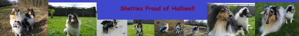 Banner Shelties Proud of Halliwell
