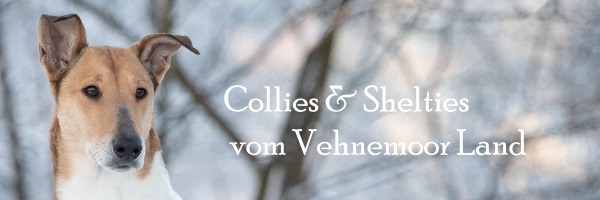 Banner Shelties vom Vehnemoor Land